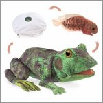 Folkmanis hand puppet frog life cycle